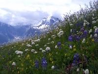 Copper Ridge Trails