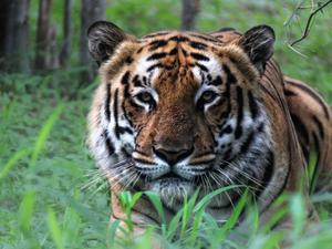 Central India Tiger Tour Photos