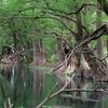 Camecuaro Parque Nacional del Lago