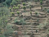 Cardamom Hills