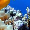 Hurghada Diving Site