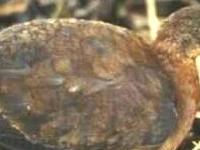 Allpahuayo Mishana National Reserve