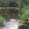 Matogrossense Parque Nacional del Pantanal