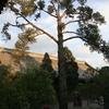 Cypress Tree In Bai Lin Temple