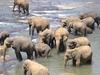 Dambulla Elephant Camp