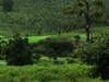 Dancing Cloud In Green Valley Of Daringbadi Orissa