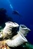 Derawan Archipelago - View