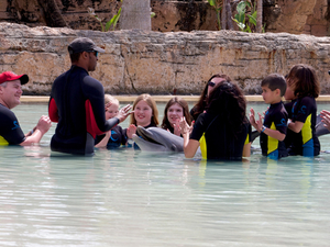 Animals Tour and Interaction with Dolphines Fotos
