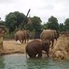 Dublin Zoo Herd