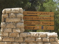 Dibeen Forest Reserve