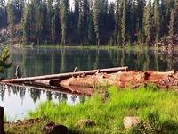 Lassen National Forest