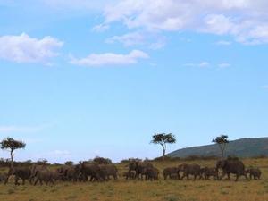 Masai Mara Game Reserve Safari Photos