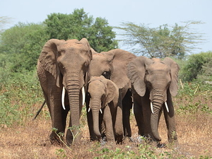 Northern Budget Safari Circuit 4 Days in Tanzania Photos