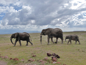 Amboseli, Masai Mara and Lake Nakuru Photos