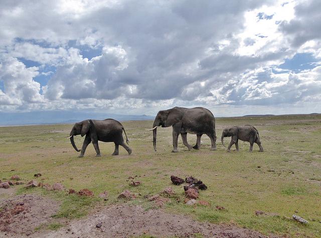 Amboseli, Masai Mara and Lake Nakuru Photos