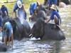 Elephants In Lampang