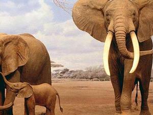 3 Days Best Amazing Wildlife Photos