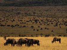 Great Migration Safari - Kenya