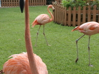 Ardastra Gardens, Zoo and Conservation Center
