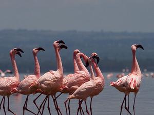 3 Nights 4 Days Masai Mara and Lake Nakuru Safari Fotos