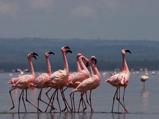 3 Nights 4 Days Masai Mara and Lake Nakuru Safari Photos