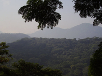 Bosque de Tijuca