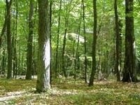 Forest complex of Rudka Forest