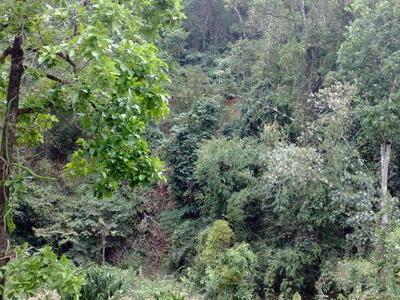 Forest In  Mondulkiri