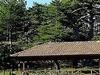 Beyagac Ancient Black Pine Forests