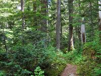 Stephen Mather Wilderness