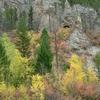 Fall Leaves Big Belt Mountains