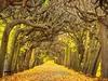 Gdansk Autumnal Alley - Poland