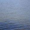 Ruger Lake