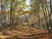 Rescue Creek Trail