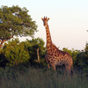 Kruger Safari Package
