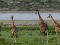 Safari Kenya and Tanzania