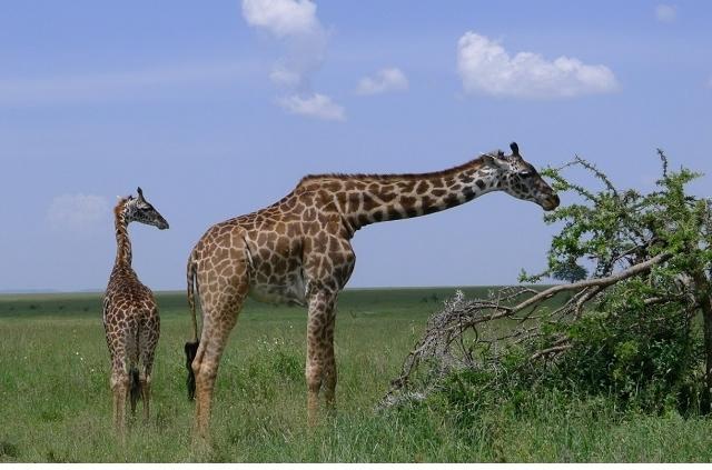 Tanzania Nature Photography Safari Photos