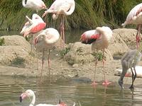 Pulicat Lake Bird Sanctuary