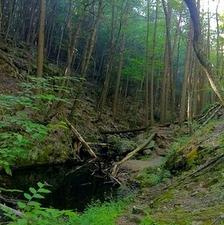 Green Fall River