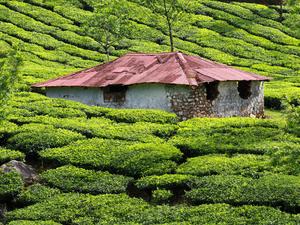 Exotic Kerala 11 Days Photos