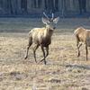 Deer In The National Park