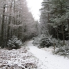 Glenmore Forest Park