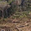 Gorongosa Clearcut