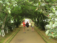 Hedgerow Tunnel