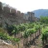 High Culture Vine Training In Wachau