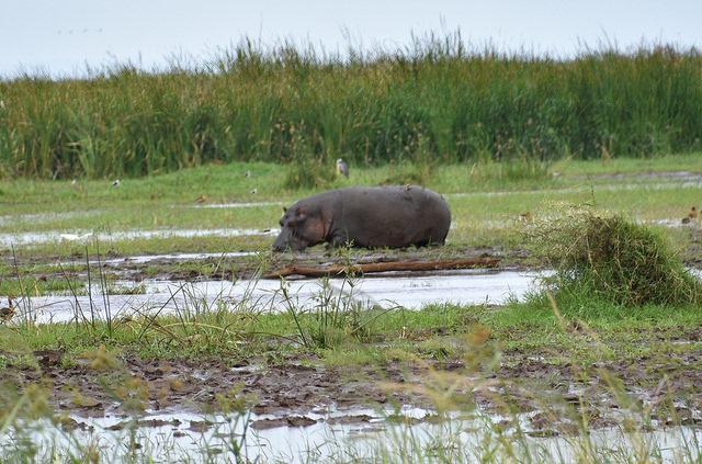 Safari in Tanzania - North and South Circuit Photos