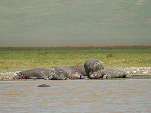 Day Tour From Arusha Town To Ngorongoro Crater Photos