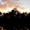 Hobe Sound Florida Sunset