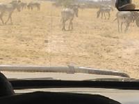 East Africa Budget Adventure Safaris