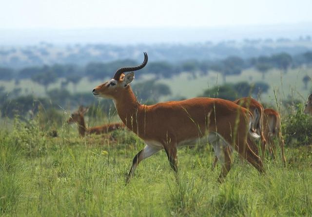 Uganda Wildlife Safaris 16 Days 15 Nights Photos